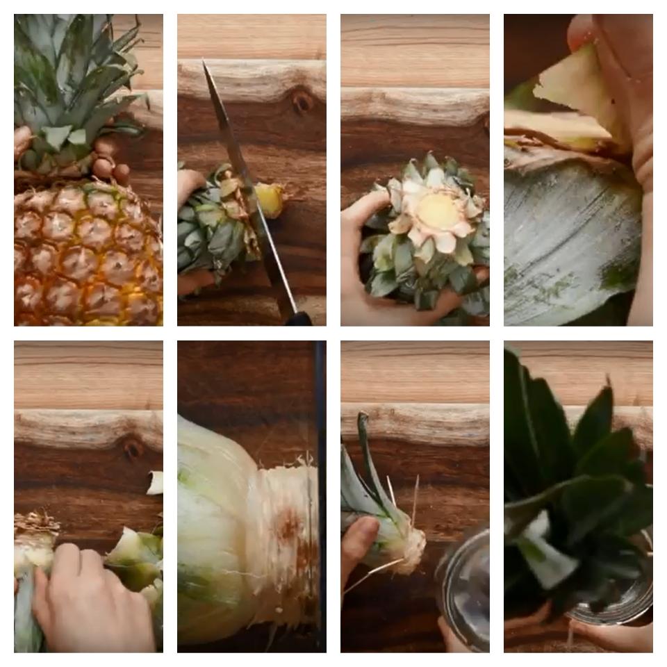 Ananassi istutamine