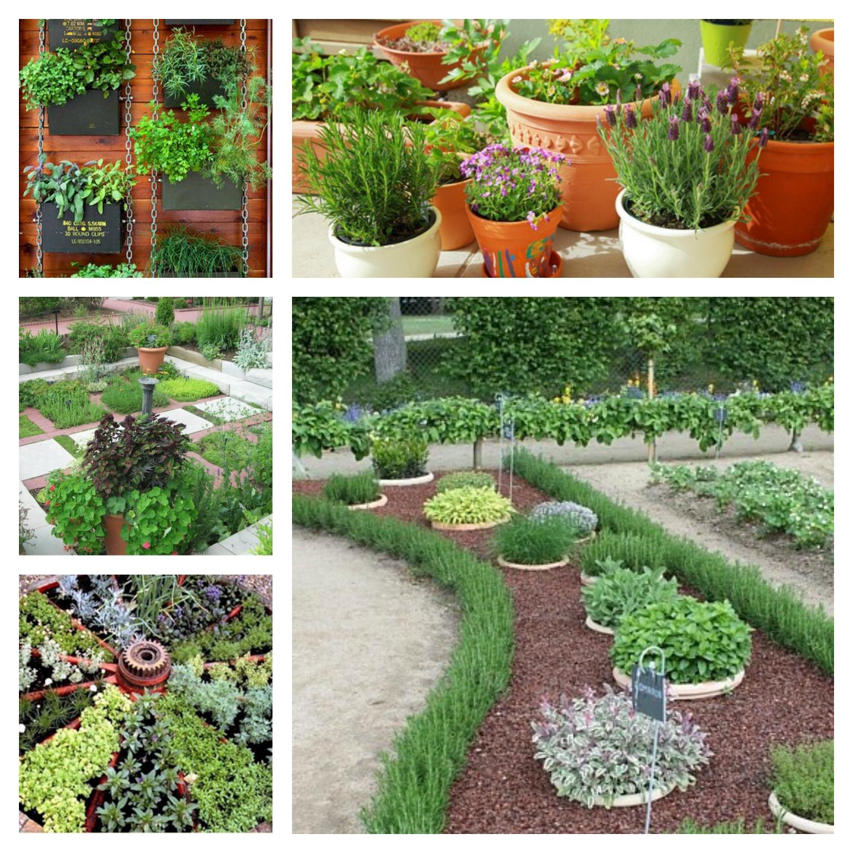 Elu5-Ravimtaimede aias kasvatamine