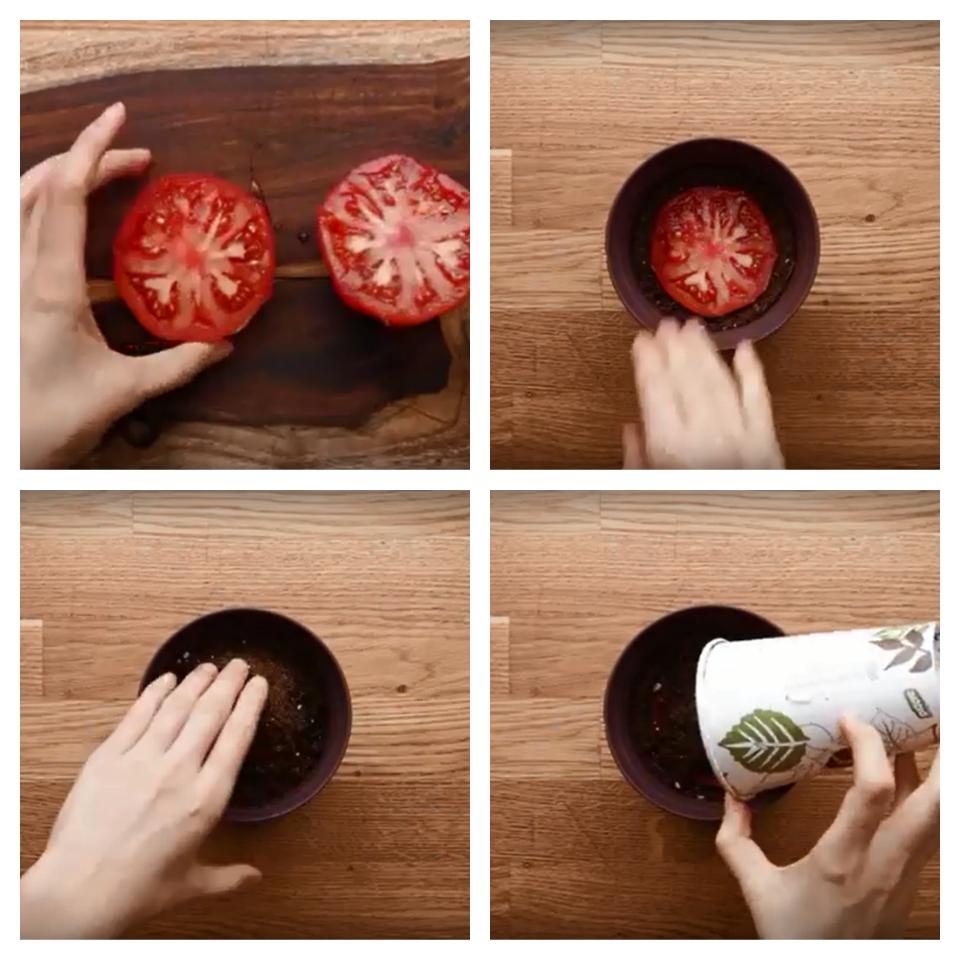 Tomati istutamine