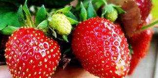 Maasikad potis