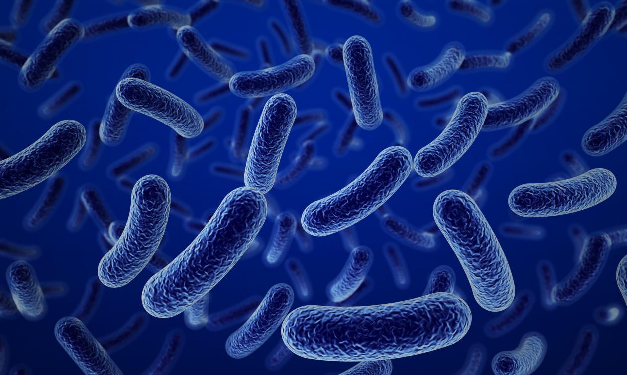 bakterid