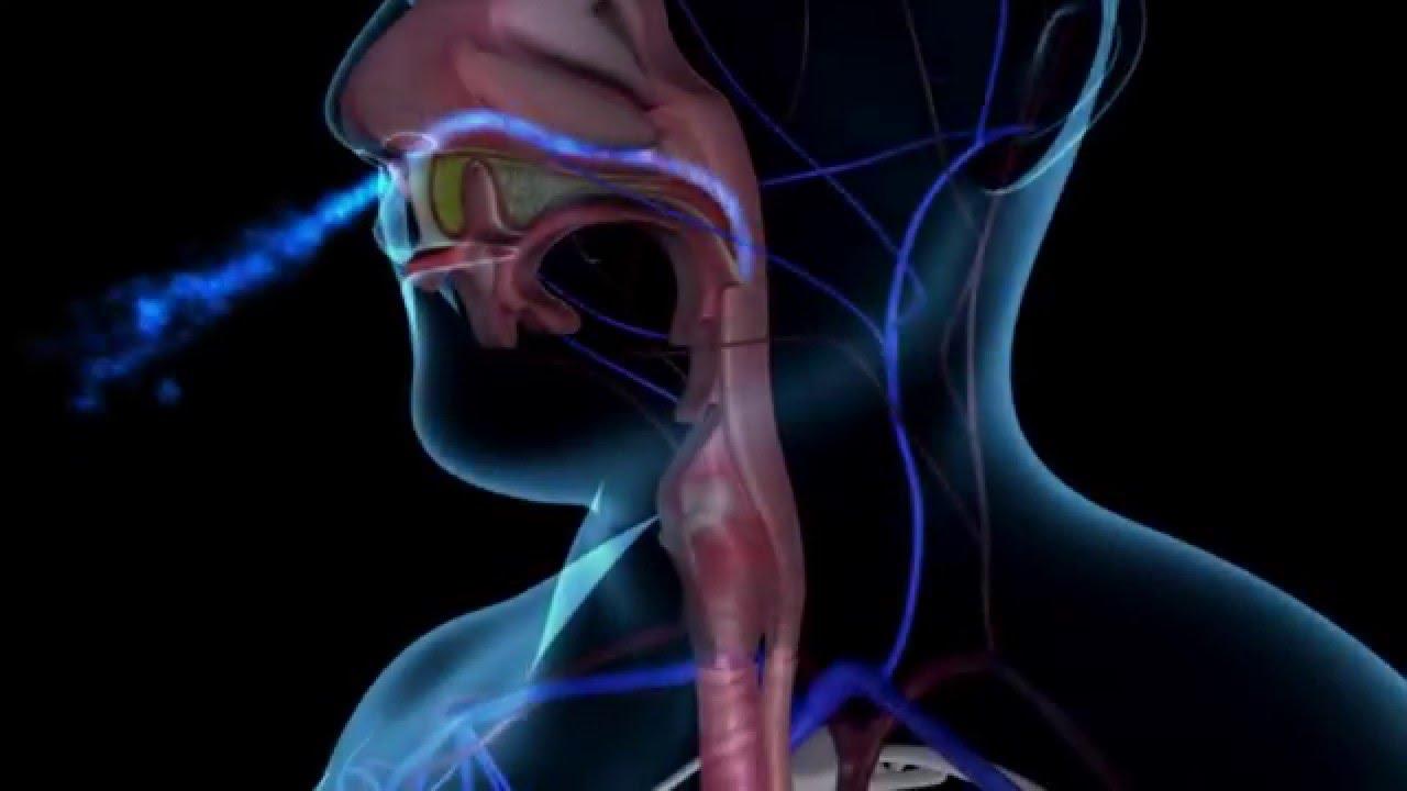 Elu5-Valude ja haiguste metafüüsilised tähendused-kurgu-kõrva-ja-ninahaigused