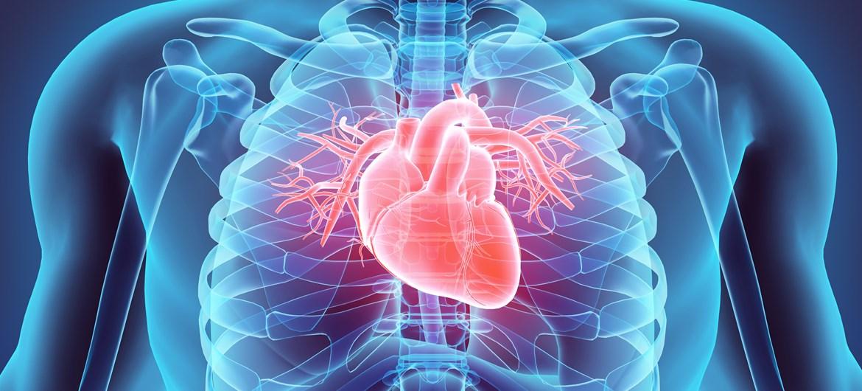 inimese süda