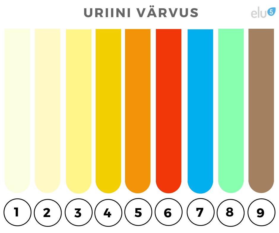 Elu5 - Uriini varvuse tabel. Mis värvi on sinu uriin