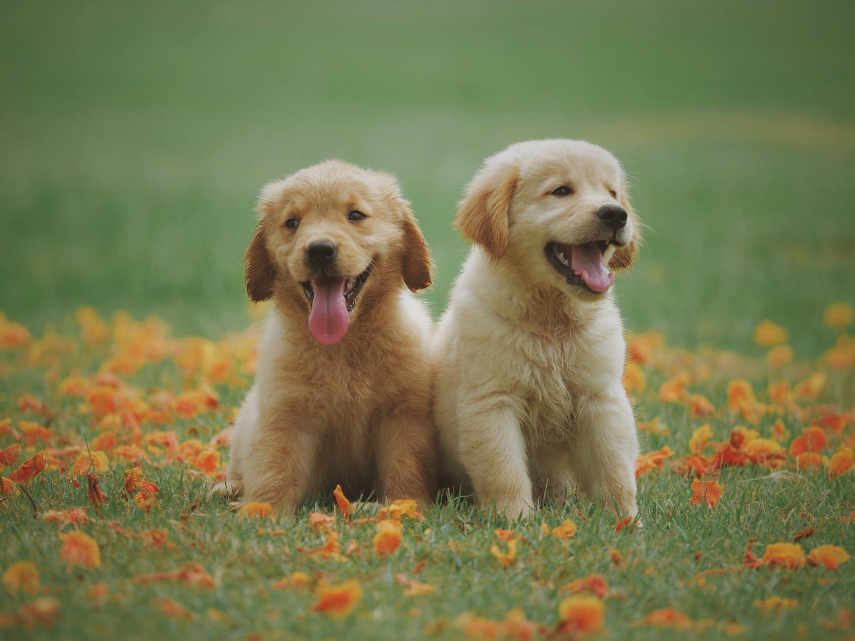 armsad koerad